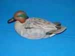 Teal-Green Wing Drake